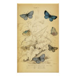 Vintage Blue Butterflies Poster