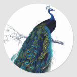 Vintage Blue Elegant Colourful Peacock Round Sticker