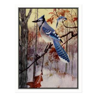 Vintage Blue Jay by Robert Bruce Horsfall Postcard
