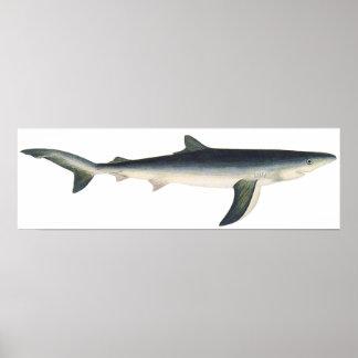 Vintage Blue Shark, Aquatic Ocean Marine Life Poster