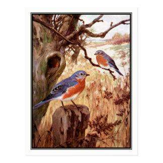 Vintage Bluebird by Robert Bruce Horsfall Postcard