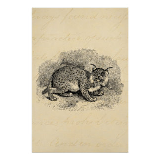 Vintage Bobcat 1800s Bob Cat Lynx Illustration Poster