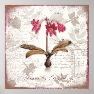 Vintage botanical art prints Amaryllis Belladonna