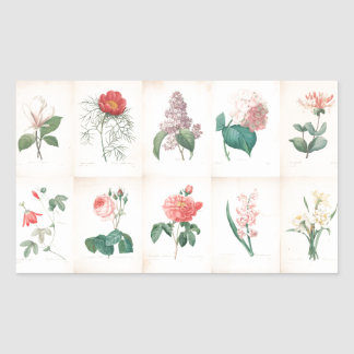 Vintage botanical by Redoute - Stickers