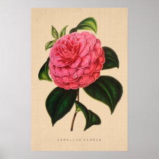 Vintage Botanical - Camellia Clodia Poster