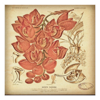 Vintage Botanical Canvas. Poster