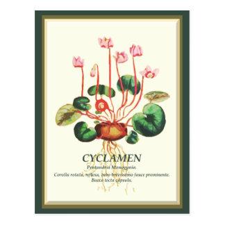 Vintage Botanical Cyclamen Garden flower art Postcard