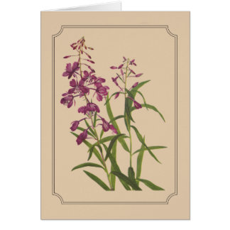 Vintage Botanical Drawing of Wild Fireweed Card