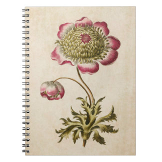 Vintage Botanical Floral Anemone Illustration Spiral Notebook