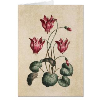 Vintage Botanical Floral Cyclamen Illustration Card