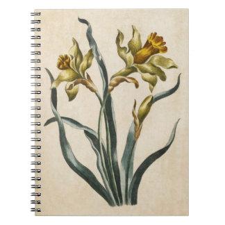 Vintage Botanical Floral Daffodil Illustration Notebooks