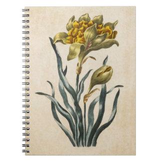 Vintage Botanical Floral Daffodil Illustration Spiral Notebook