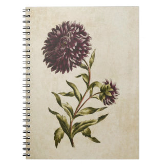 Vintage Botanical Floral Double Aster Illustration Notebooks