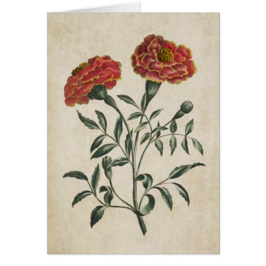 Vintage Botanical Floral French Marigold Card
