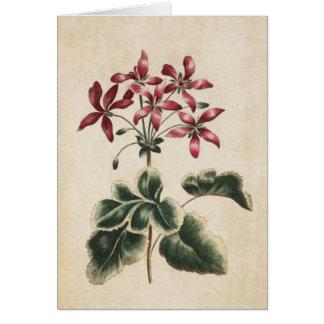 Vintage Botanical Floral Geranium Illustration Card