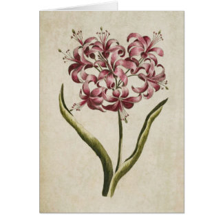 Vintage Botanical Floral Guernsey Lily Card