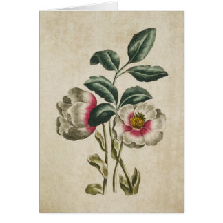 Vintage Botanical Floral Hellebore Illustration Card