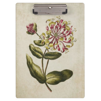 Vintage Botanical Floral Honeysuckle Illustration Clipboard