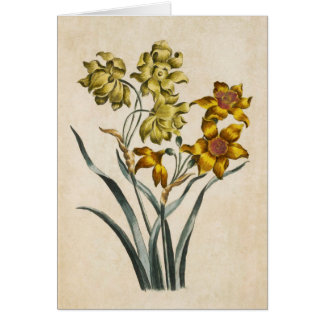 Vintage Botanical Floral Jonquil Illustration Card