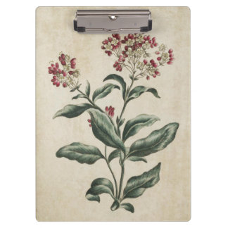 Vintage Botanical Floral Laurestina Illustration Clipboard