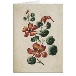 Vintage Botanical Floral Nasturtium Illustration Card