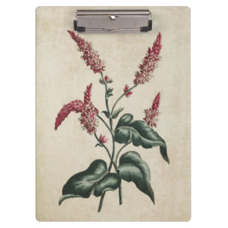 Vintage Botanical Floral Persicaria Illustration Clipboard