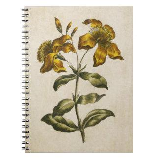 Vintage Botanical Floral St. John's Wort Notebooks