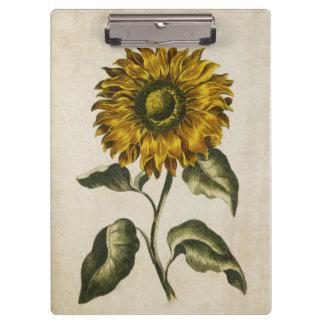 Vintage Botanical Floral Sunflower Illustration Clipboard