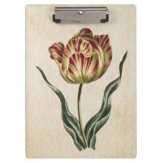 Vintage Botanical Floral Tulip Illustration Clipboards