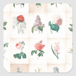 Vintage botanical Flowers by Redoute Square Sticker
