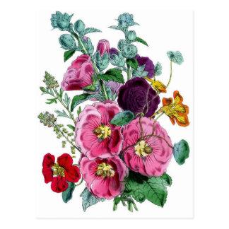 Vintage Botanical Hollyhocks Postcard
