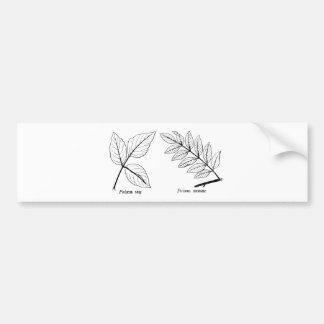 Vintage Botanical Leaves Bumper Sticker