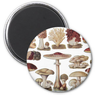 Vintage Botanical Mushrooms Magnet