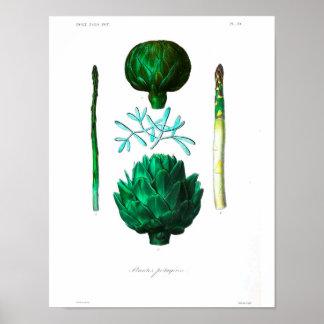 Vintage Botanical Poster - Artichoke