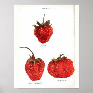Vintage Botanical Poster - Strawberry