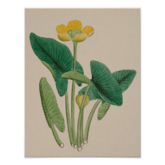 Vintage Botanical Poster - Yellow Flower