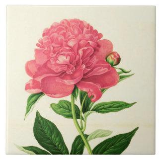 Vintage Botanical Print, Coral Pink Peony Tile