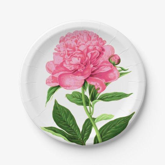 Vintage Botanical Print, Pastel Pink Peony 7 Inch Paper Plate