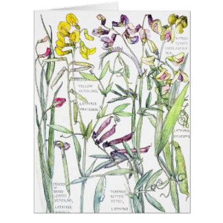 Vintage Botanical Sweet Pea Lathyrus Flowers Card
