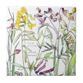 Vintage Botanical Sweet Pea Wildflower Flower Tile