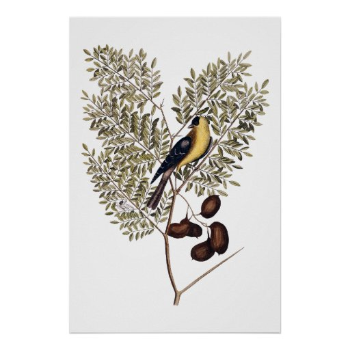 Vintage botanical with yellow bird poster