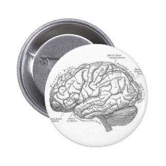 Vintage Brain Anatomy 2 Inch Round Button