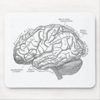 Vintage Brain Anatomy Mouse Pad