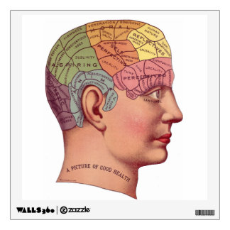 Vintage Brain Function Illustration Wall Decal