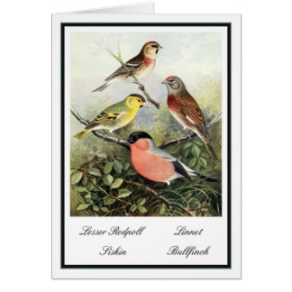 Vintage British Garden Birds Illustration Card