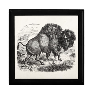 Vintage Buffalo Retro Bison Animal Illustration Gift Box