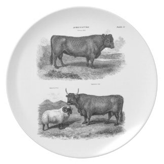 Vintage Bull Sheep Illustration Retro Cow Bulls Plate