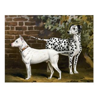Vintage Bull Terrier and Dalmatian dog art Postcard