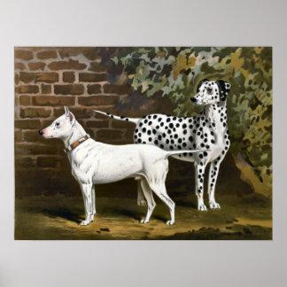 Vintage Bull Terrier and Dalmatian dog art Poster