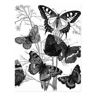 Vintage Butterfly Butterflies Print Postcard